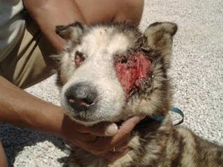 Denuncias Por Maltrato Animal Las Que M 225 S Recibe App De