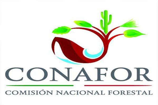 Conafor supera meta de viveros certificados for Viveros forestales conafor