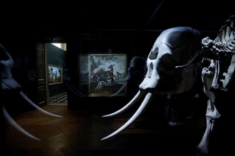 Exposición de los animales del rey en el Palacio de Versalles 01 111021